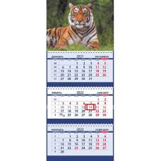Портрет бенгальского тигра
